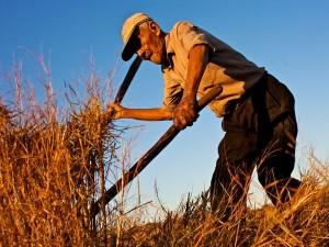 costa-rica-centenarian-farmer-300x225