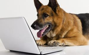 -dog-and-computer-dogs-15922-300x184