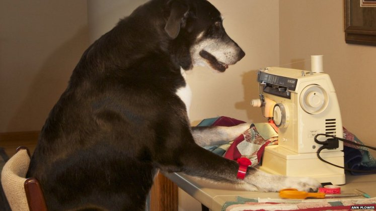 dog_sewing_x