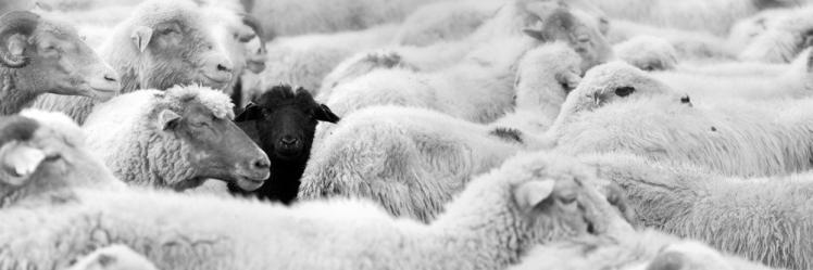 Black+sheep